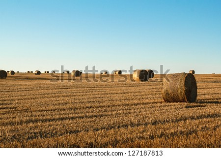hay bale in the foreground of orange rural field