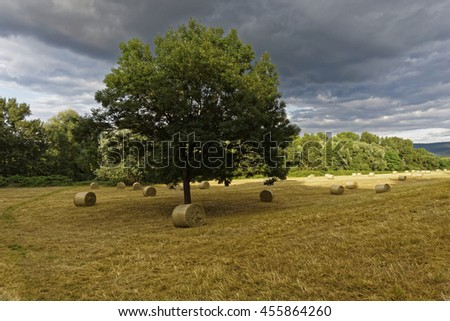 hay bale on a field        - stock photo
