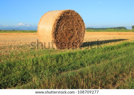 hay bale on a summer morning in Piedmont, Italy