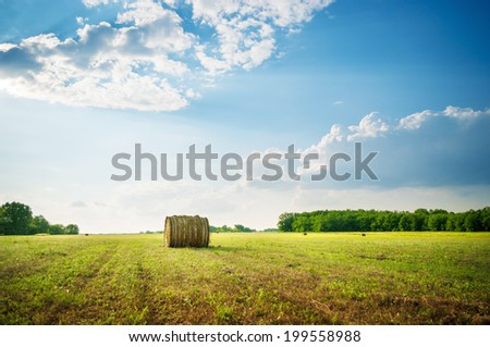 Hay bale roll in the meadow. - stock photo