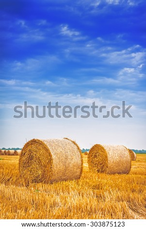 Hay bale rolls in cultivated field after wheat harvest, cloudy summer day, vintage retro toned image