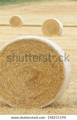Hay Bale Rolls in Field