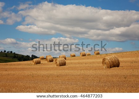 Hay bales at the summer field