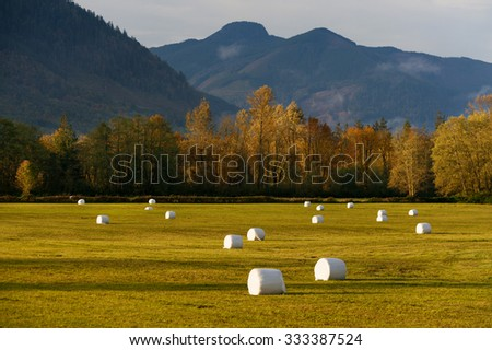 Hay Bales in a Field. Plastic covered hay bales dot the landscape along the North Cascades Highway, or Highway 20, in western Washington state. Autumn has taken hold of the deciduous trees. - stock photo