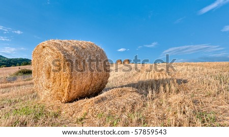 Hay bales in early morning - stock photo