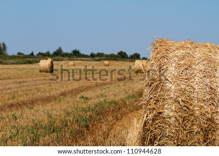 Hay bales in the countryside on a perfect sunny day