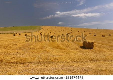 Hay bales in West Sussex, Great Britain