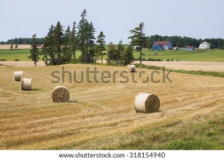 Hay bales on a farm in rural Prince Edward Island. - stock photo