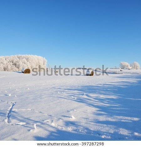 Hay bales on a snowcovered winter field - stock photo