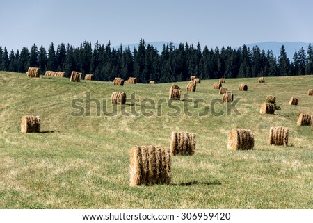 Hay bales on mountain harvested field. Hay Bales.