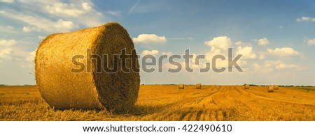Hay bales on the agricultural field after harvest. - stock photo