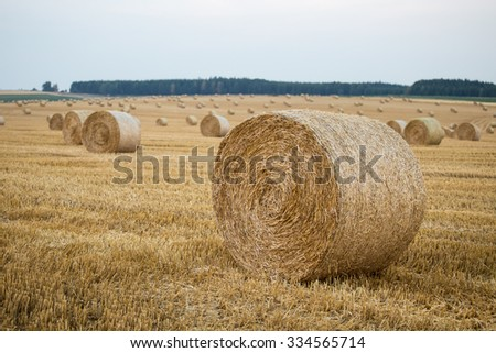 Hay bales on the field after harvest - stock photo