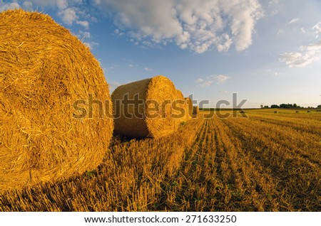 Hay bales on the field after harvest in summer. - stock photo