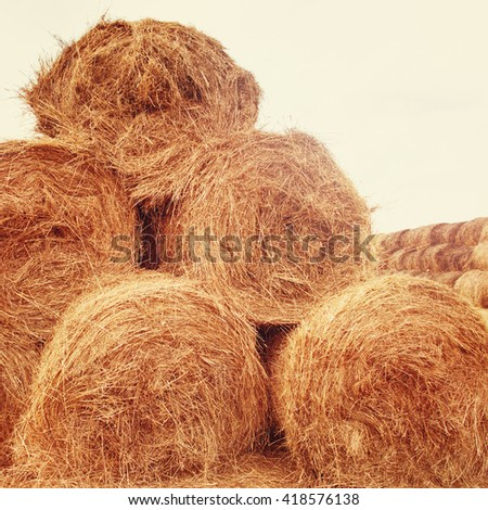 Hay bales on the field at summer time. Agriculture background and concept. Space for text. - stock photo