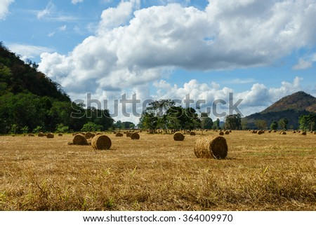 Hay bales on the field in Thailand.