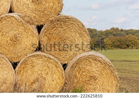 Hay bales (Straw rolls) on a late autumn afternoon. (Was seen in Brandenburg, Germany). - stock photo