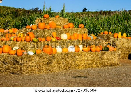 Hay Bales With Squash & Pumpkins For Halloween