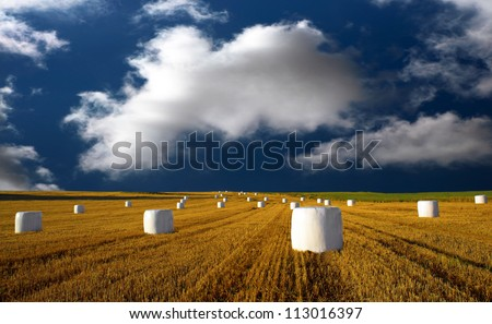 Hay bales wrapped in plastic on blue sky