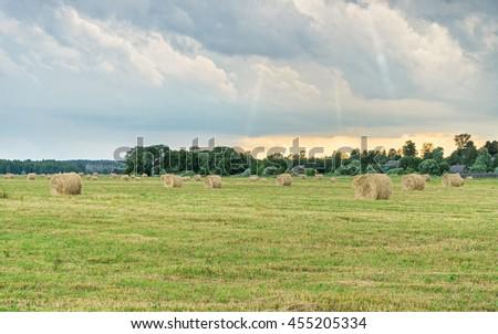 Hay cocks on green meadow before vintage village houses at sunset. Bulatovo, Kaluzhskaya region, Russia.   - stock photo