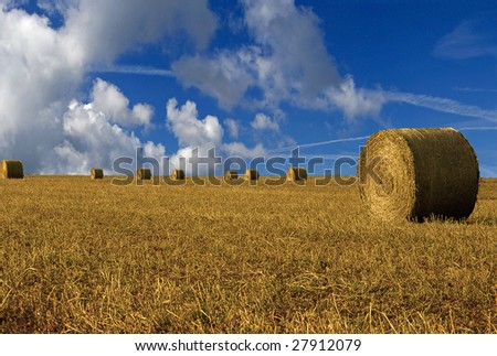 hay field in italy