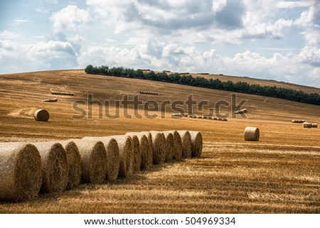 Hay harvested and rolled on field.  Germany