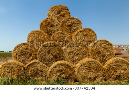 hay harvested in round haystacks on the field, the season of the harvest in the fields, haystack, hay, background, rural, field, farm, summer, wheat, agriculture - stock photo