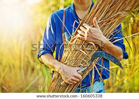 hay in farmer's hands - stock photo