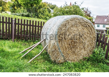 Hay is grass, legumes or other herbaceous plants that have been cut, dried, and stored for use as animal fodder, particularly for grazing livestock such as cattle, horses, goats, and sheep. - stock photo