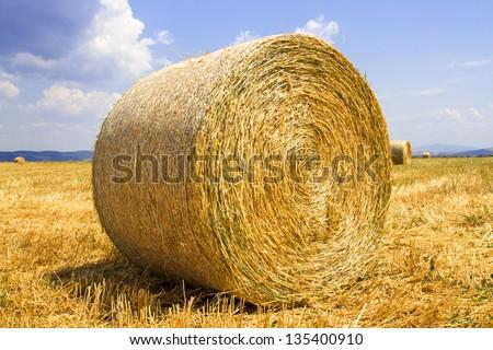 hay rolls on harvest field - stock photo