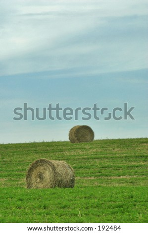 Hay stacks on green grass - stock photo