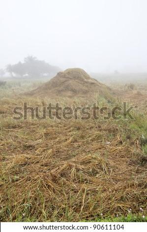 Hay Straw Morning Thailand Field Fog - stock photo