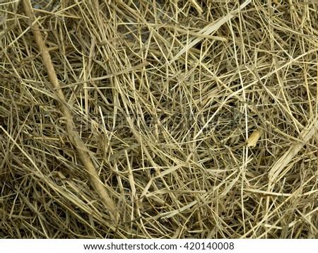 Haystack on background - stock photo