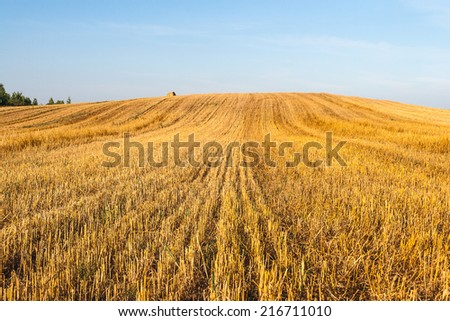 Haystacks in the field at sunny day - stock photo
