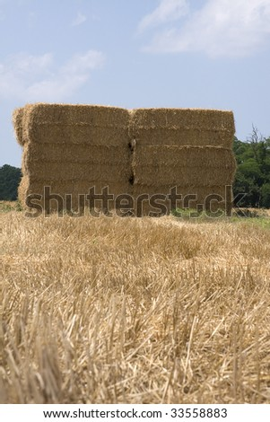 Haystacks which are actually made out of wheat that has just been harvested.