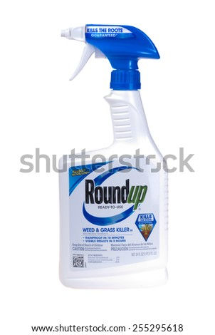 Hayward, CA - February 23, 2015: 24 fl oz Bottle of Roundup brand ready to use weed and grass killer -Illustrative Editorial - stock photo