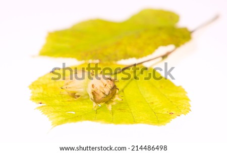 Hazel nuts on leaf isolated on white background - stock photo