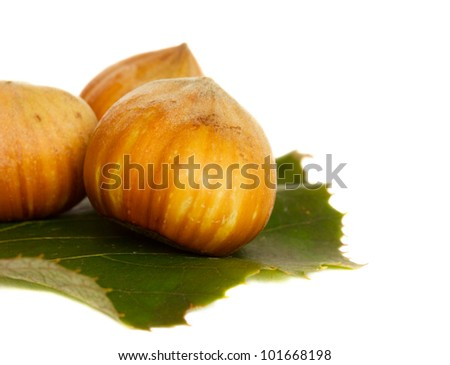 hazel nuts with green leaf isolated on white background - stock photo
