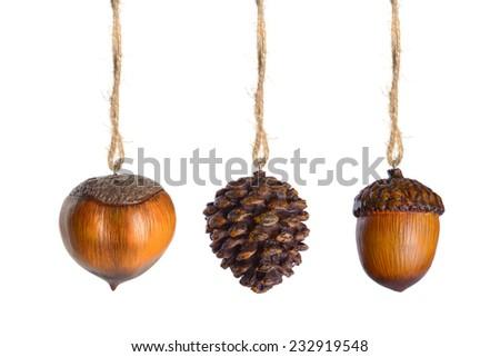 Hazelnut. Acorn. Bump. - stock photo