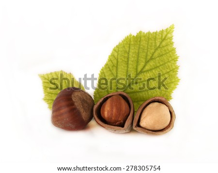 hazelnut with leafs and shelled kernel
