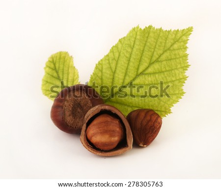 hazelnut with leafs and two kernel