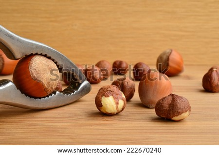 Hazelnuts cracking, one nut in nutcracker and several hazelnuts in background - stock photo