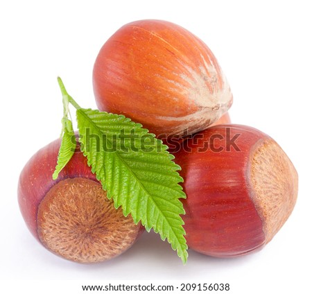 Hazelnuts, filberts in shells and green leaf. Food ingredients  - stock photo