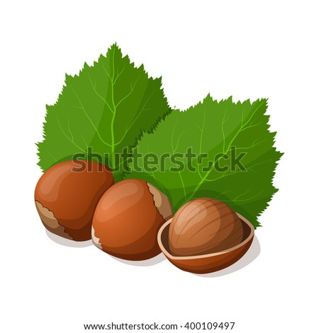 Hazelnuts with leafs isolated on white. illustration.