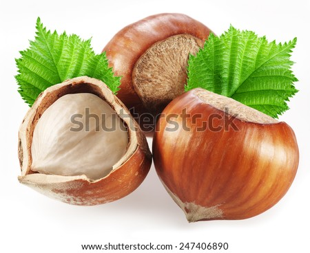 Hazelnuts with leaves on a white background. - stock photo