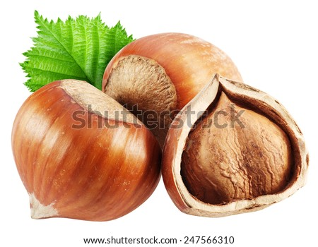 Hazelnuts with leaves on a white background. Clipping path. - stock photo