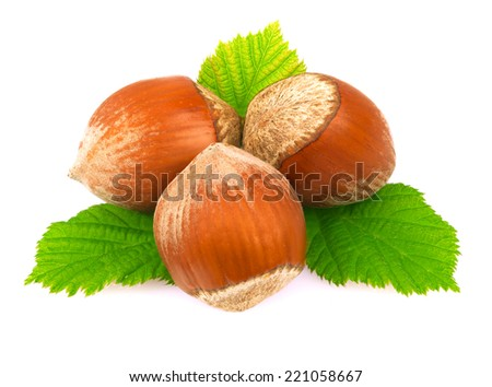 Hazelnuts with leaves on white.