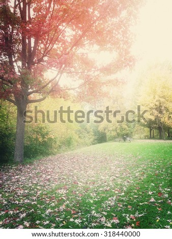 Hazy autumn landscape with colorful trees and green lawn. Quebec, Canada. - stock photo
