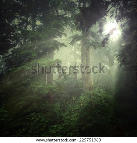 Hazy sun shining through trees into a forested area. - stock photo