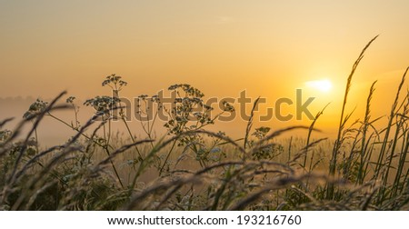 Hazy sunrise over wild flowers in spring