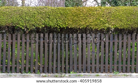 HD seamless horizontal texture, wooden fence topped by bushes